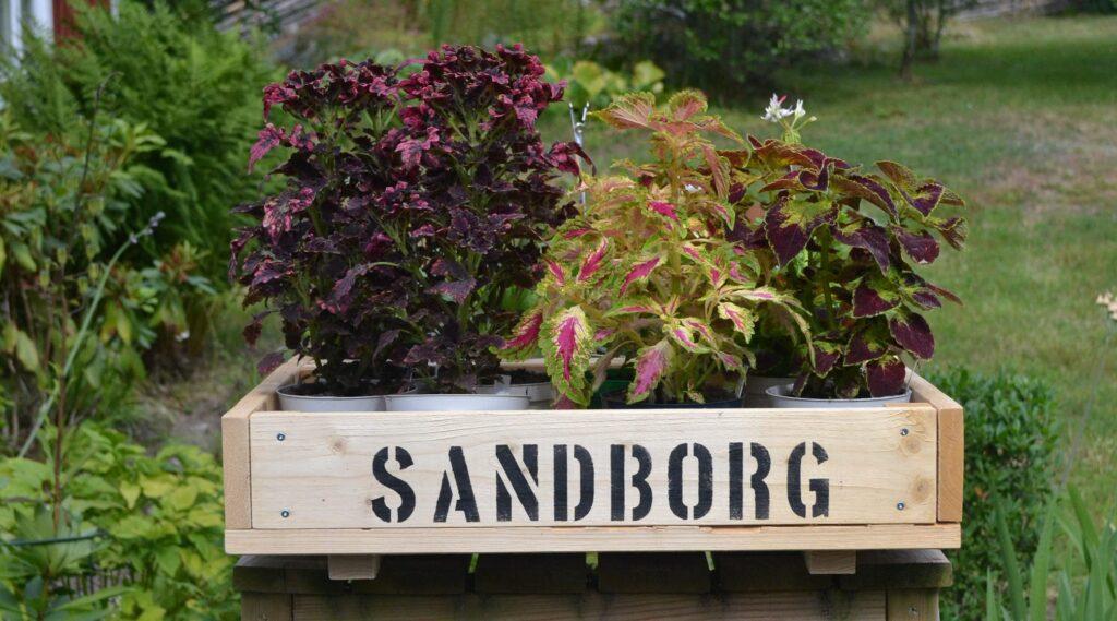 Sandborgs trädgård